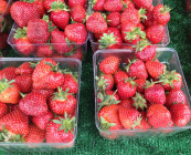 organic_local_strawberry
