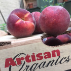 timg_1916_peaches-organic